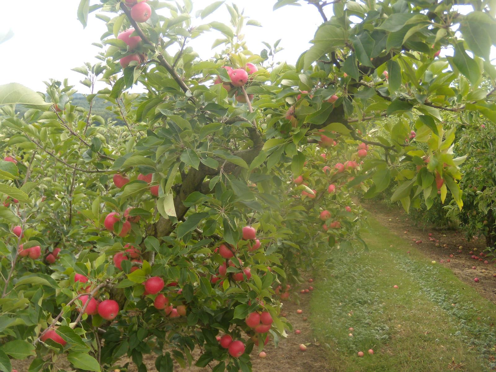 Orchard Robertsbridge circular