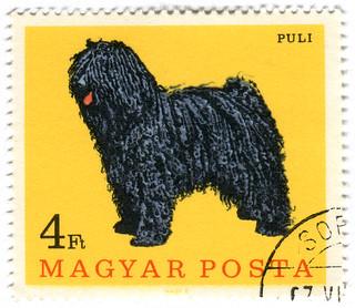 Hungary postage stamp: Puli dog   by karen horton