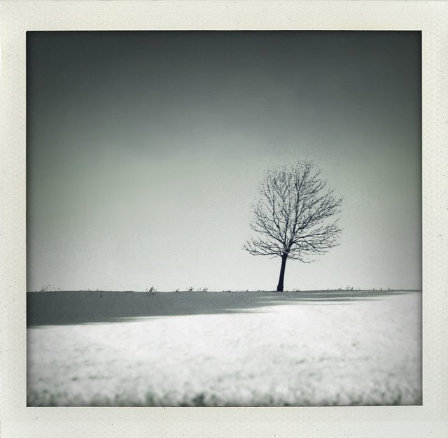 Tree v3