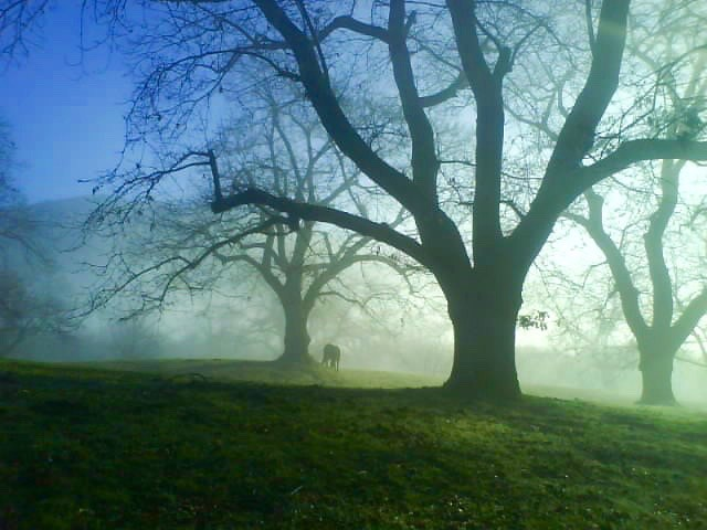 sommersi nella nebbia