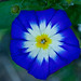 Gardening : Summer Flowers #14 by foto_morgana