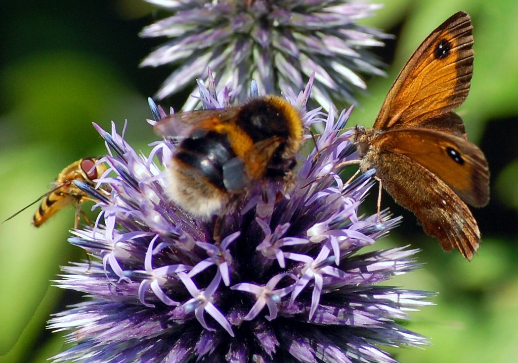 Bees and a butterfly on a flower