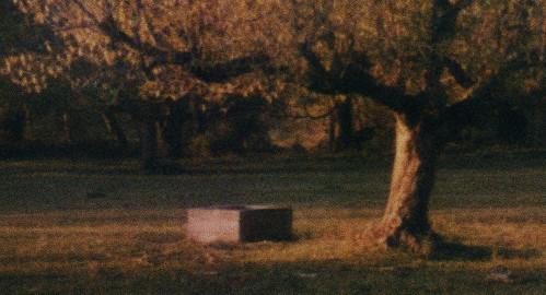sunset tree film nature polaroid sx70 iso100 evening tennessee pasture crop instant epson expired magichour dayton 1851 v700 artistictz tzartistic