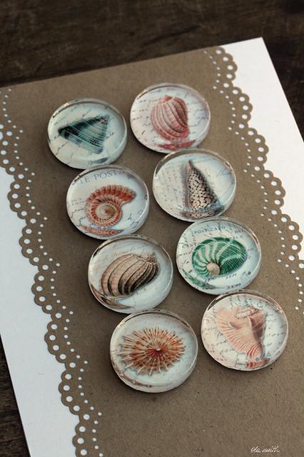 glass magnets :: shells I