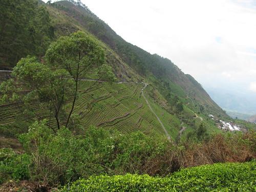 travel mountain asia asien factory view tea country hill hills sri lanka asie srilanka hillcountry range 2010 haputale liptonseat dambatenne img0911 dembatenne