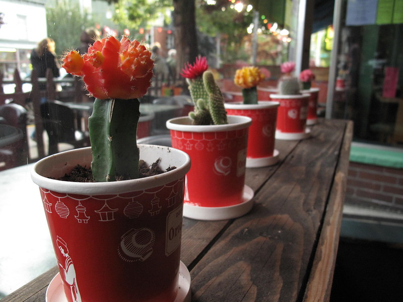 takeout container planters