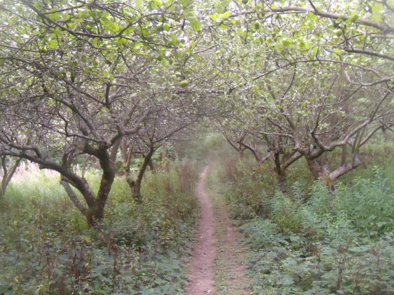 Orchard Robertsbridge circular (short)