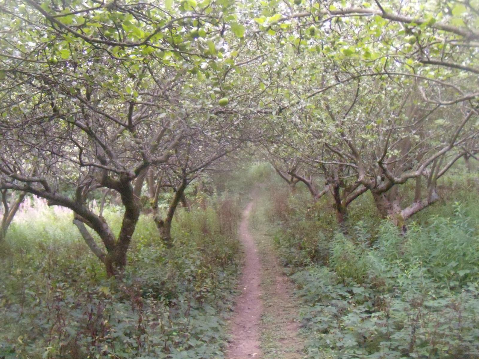 Orchard Robertsbridge circular (short)