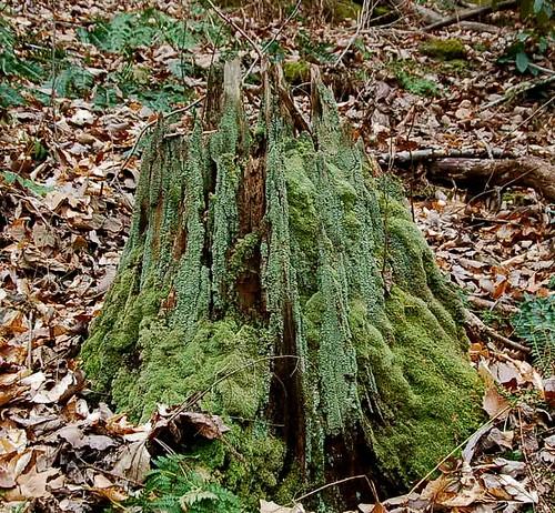 moss fixerky bigsinkingoilfield