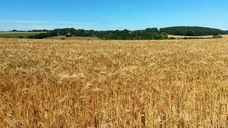 barley_northdowns_folkstone