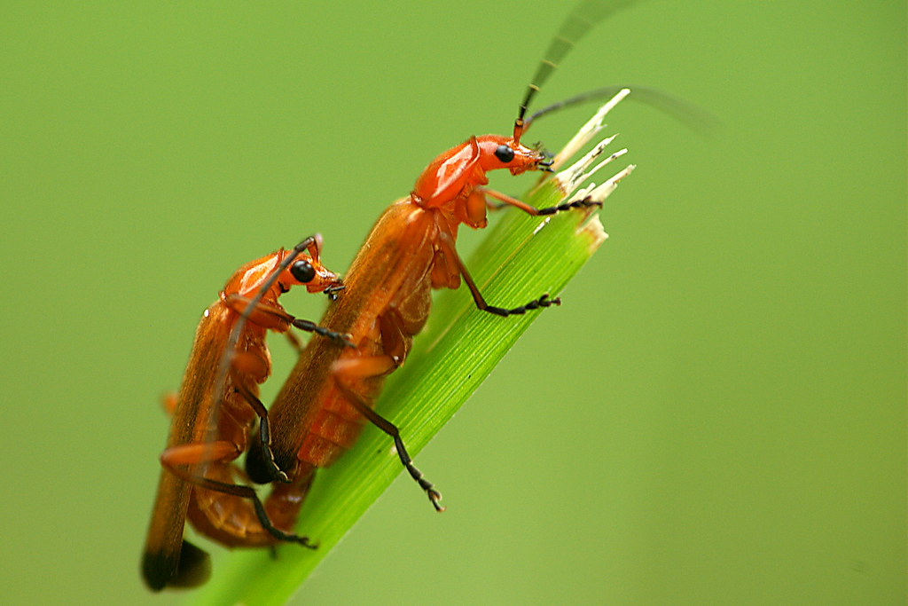 Características-de-los- insectos