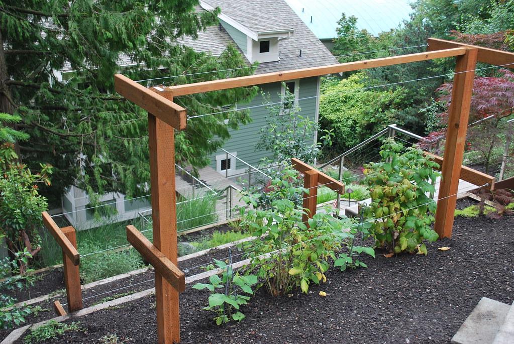 Climbing Privacy Plants