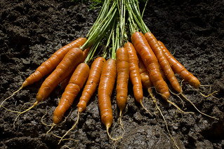 the garden delivers: carrots | by woodleywonderworks