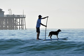 One man and his dog went to ride a surfboard... | by Images by John 'K'