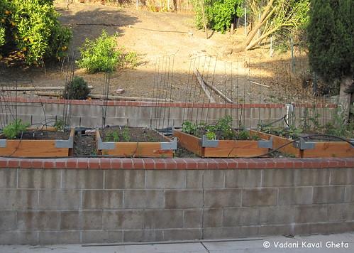 Vegetable Garden | by Vadani Kaval Gheta
