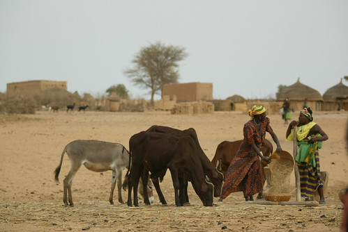 Village women and livestock in Niger | by International Livestock Research Institute
