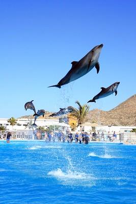 Nado con delfines, Cabo San Lucas