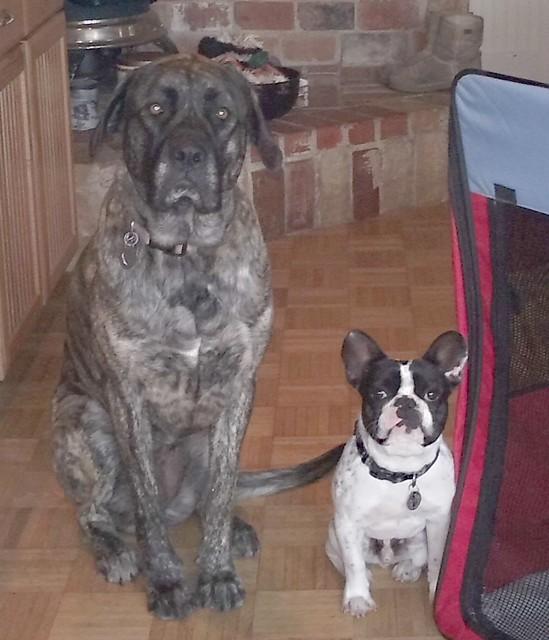 Lily & Bruno