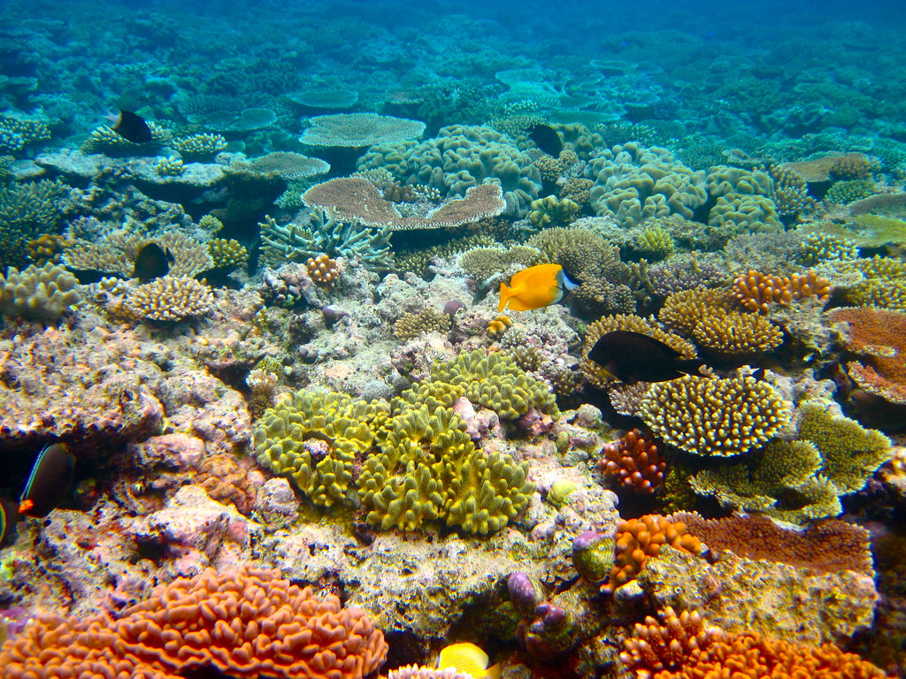 The Great Barrier Reef - 164 | Kyle Taylor | Flickr