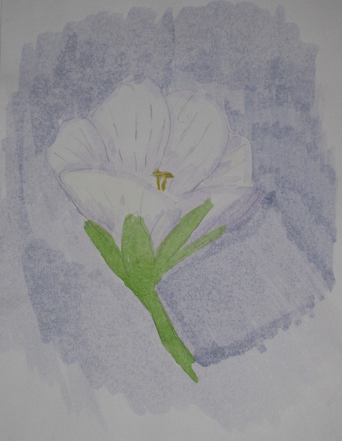 White flower at Ski Beach