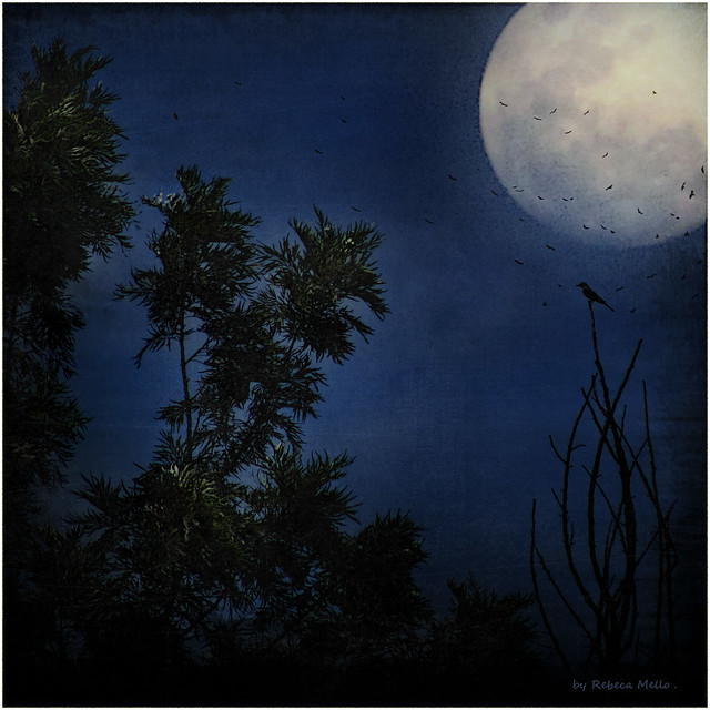 Moonlight serenade ..