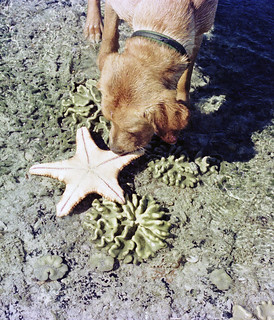 Digs with Starfish - 1978