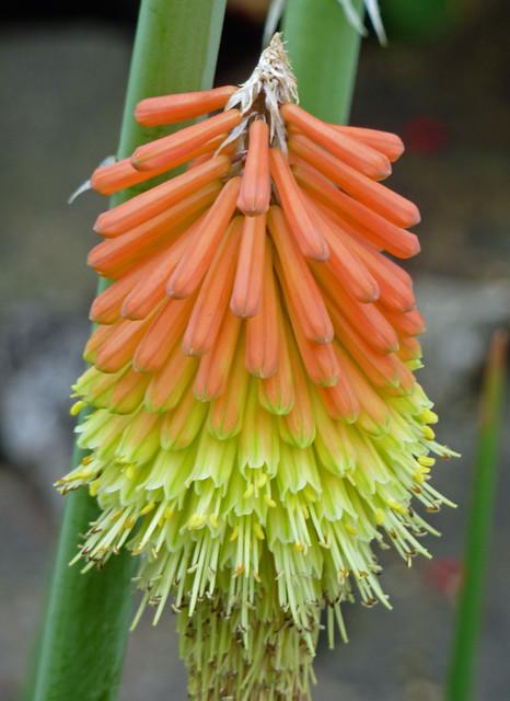 Very interesting looking flower in Sonoma