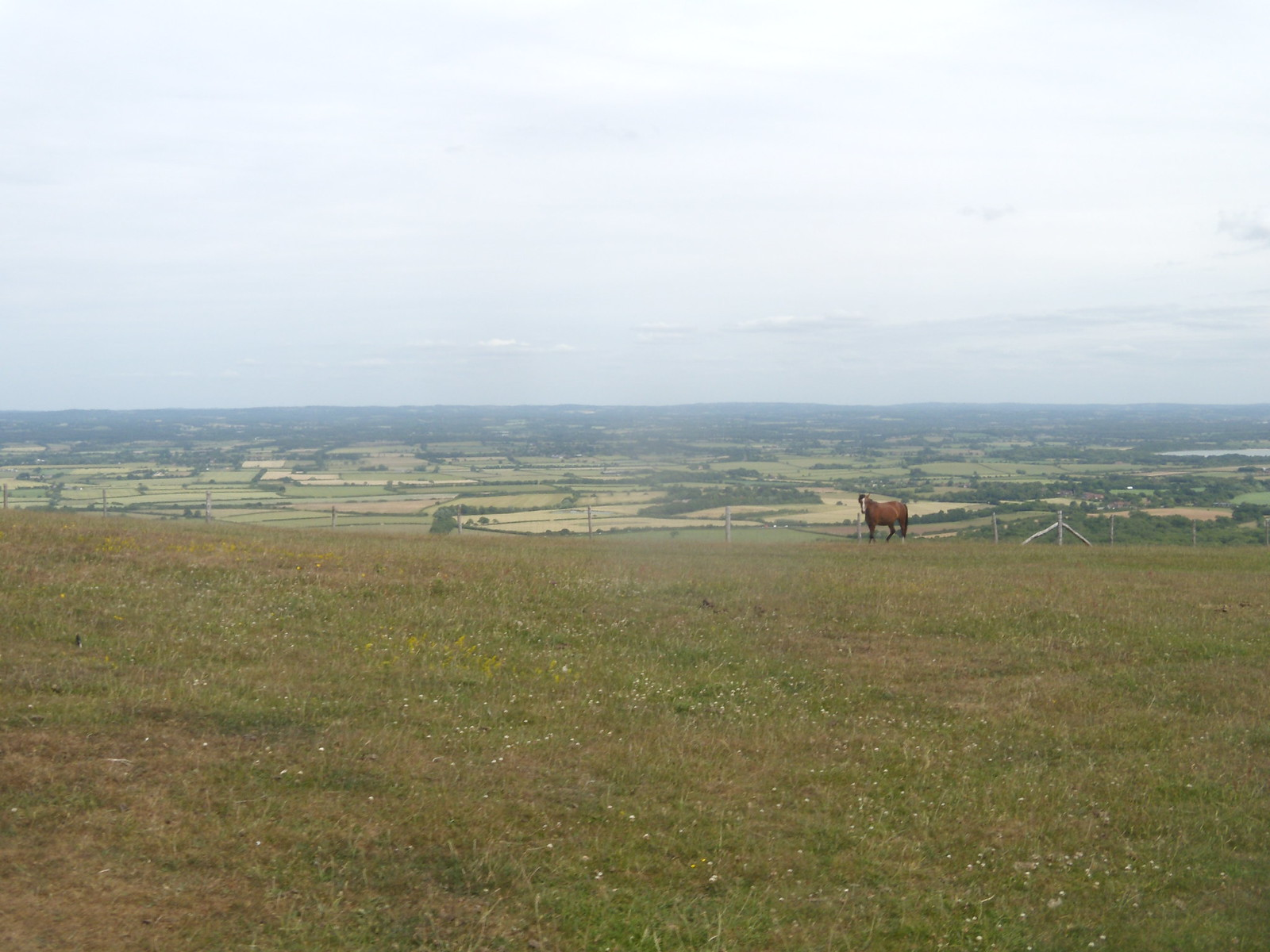 Horse Glynde to Seaford