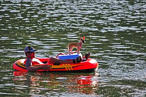 california red dog water northerncalifornia river friend floating raft tubing sacramentoriver icechest tripledigits raiderfan stayingcool champbass2 hotsummertemperatures