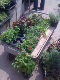 poss plants   by tenantspin