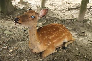 blind deer | by Tabitha Russell