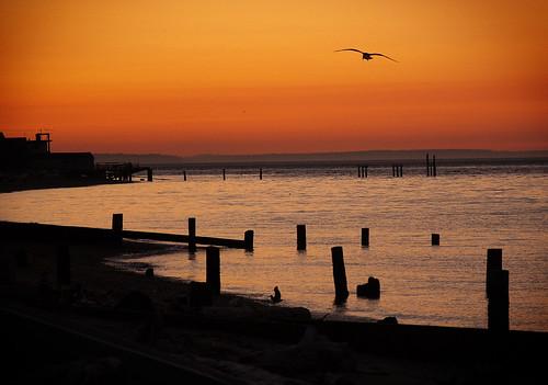 sunset beach water pier washington seagull pugetsound piling hansville pointnopoint