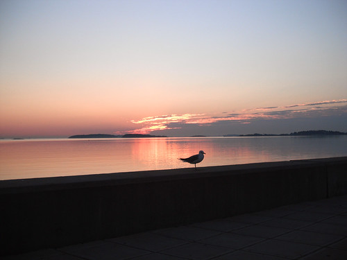 beach birds sunrise ma quincy wollastonbeach