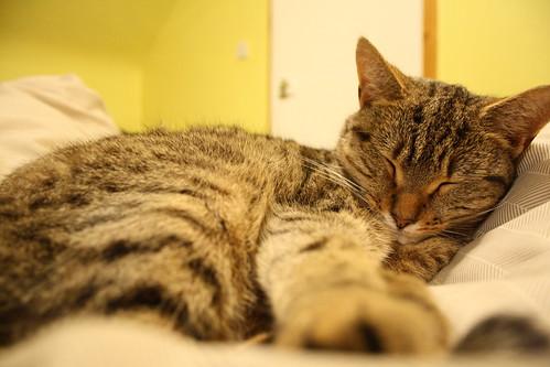 Cat | by alex012