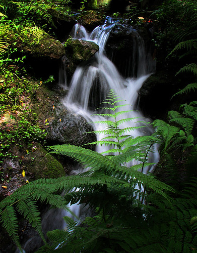 flowers stilllife scenery forrest florida waterfalls ocala dunnellon rainbowsprings