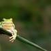 pomeriggio nella natura by evergreenpics