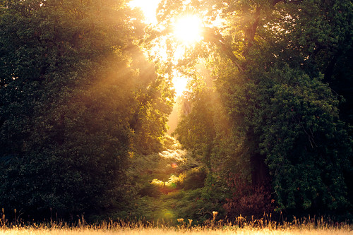 lighting morning trees light summer england sun mist nature misty fog fairytale forest sunrise landscape golden countryside kent woods nikon ethereal flare lonely rays emotional sunrays wonderland storybook magical 70200 f28 enchanted d3