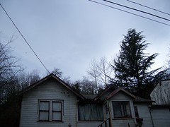 Electric Pine
