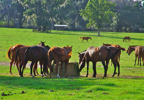 Ocala horse farm | by susieblackmon