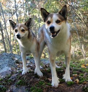 Eriksro Stojiga Sandy & Eriksro Kökar-Sture