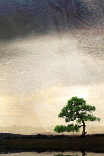 iPad Wallpaper for iPhone - tree of joy | by Cornelia Kopp