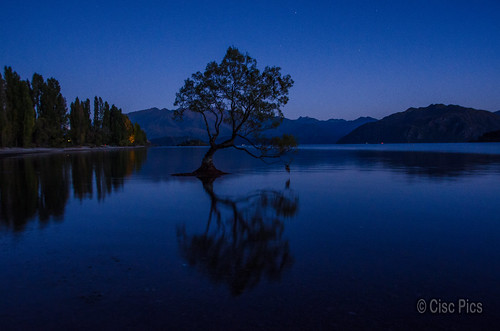 tree wanaka newzealand nature bluehour dawn nikon nikkor 18200 d7000 dx water lake aotearoa reflection southisland morning otago