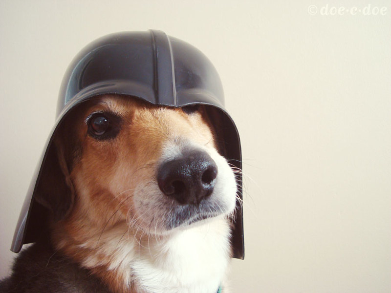 darth dog 2