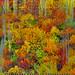 Fall by M Atif Saeed