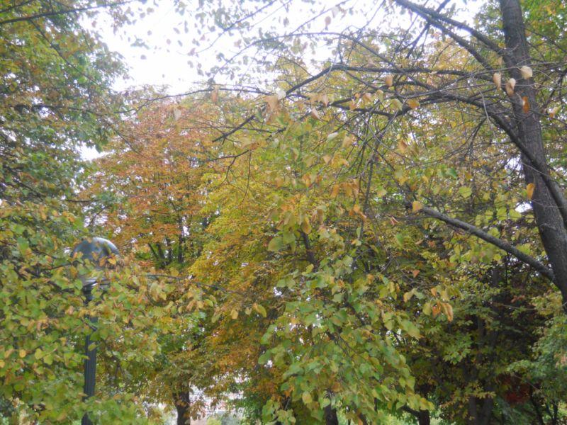 Árboles en otoño 12
