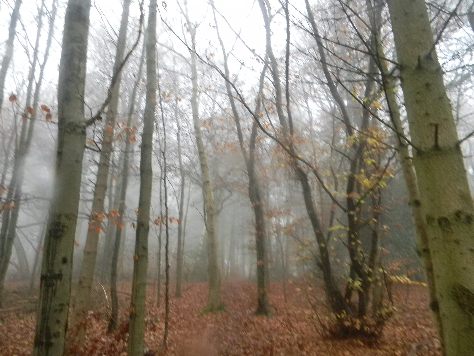 Trees in the mist Wendover Circular