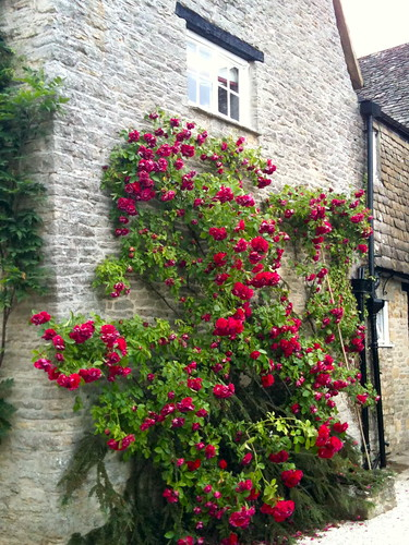 Climbing roses at Minster Lovell Village | by Tip Tours