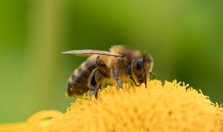 Bee- tastic | by susie2778