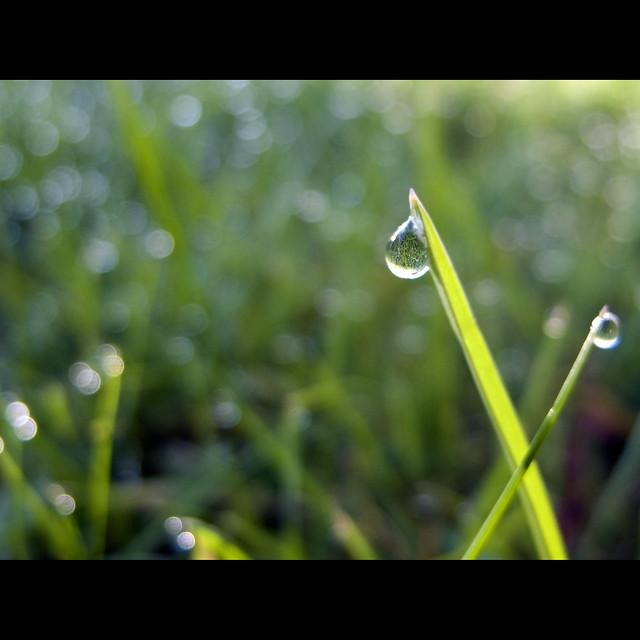 My lawn in a drop of dew