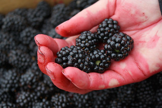 Blackberries | by TinyTall